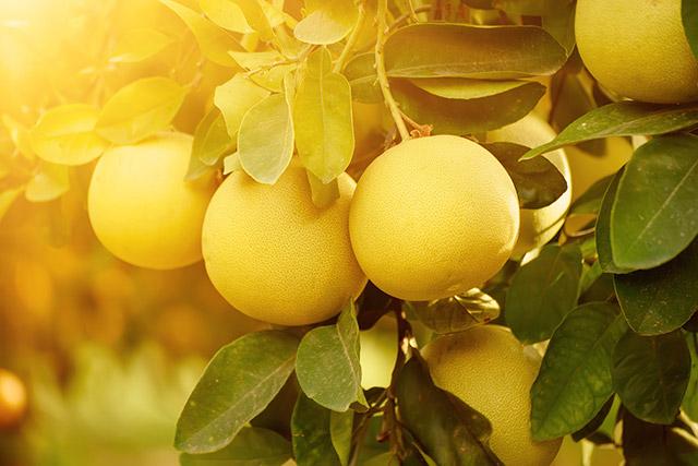 Beitrag: Stoßdämpfung nach dem Vorbild der Pomelo-Frucht
